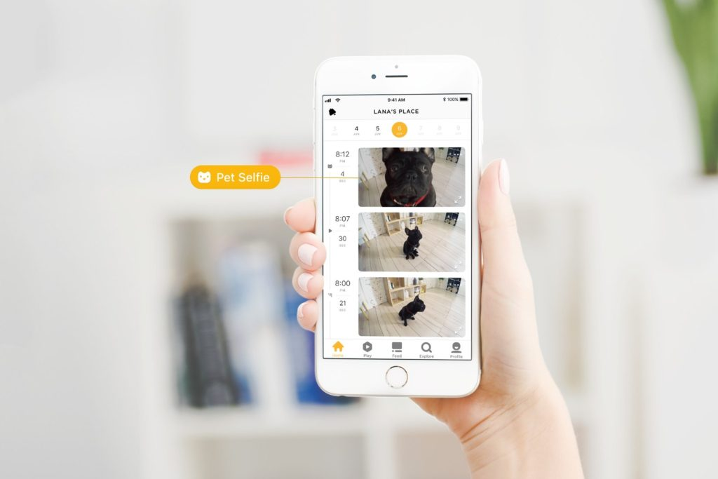 Petcube Enters the Year of the Dog with AI-powered Pet Recognition and Introduction of Pet Selfies